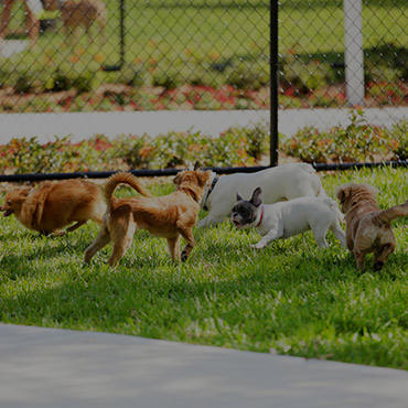 Large Dog Park at Blue Koi Apartments